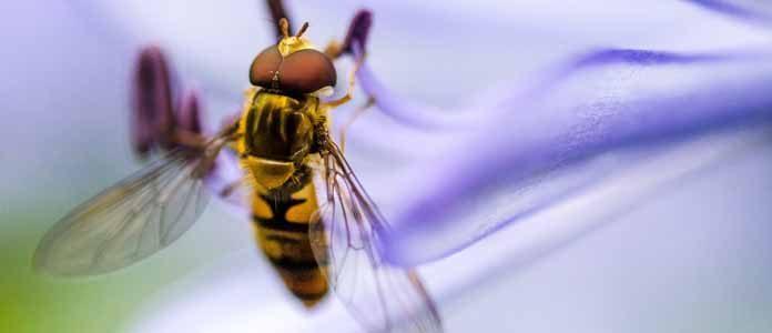 Alergija na pike
