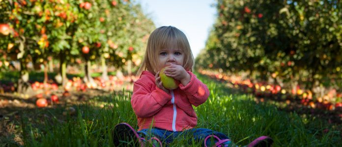 Otroška hrana