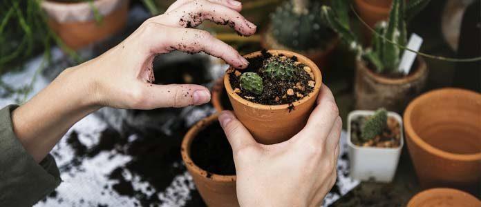 Zasaditev vrtička