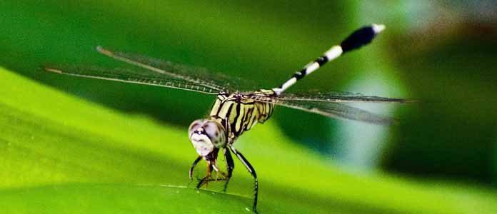 Piki insektov