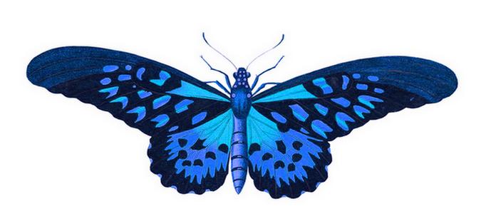 metulj2